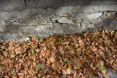 fallen-leaves_22553421986_o